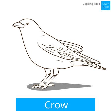 cuervo: Crow aprender ilustraci�n educativa p�jaros vector del libro para colorear juego
