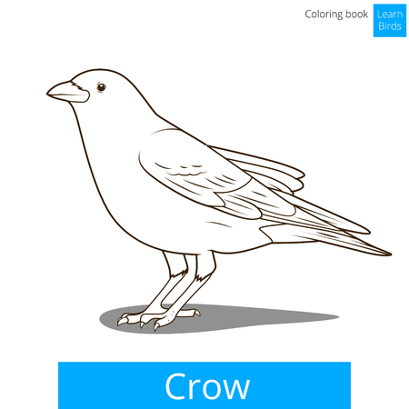 crow: Crow learn birds educational game coloring book vector illustration
