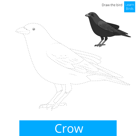 crow: Crow learn birds educational game learn to draw vector illustration