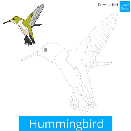 migratory: Hummingbird learn birds educational game learn to draw vector illustration Illustration