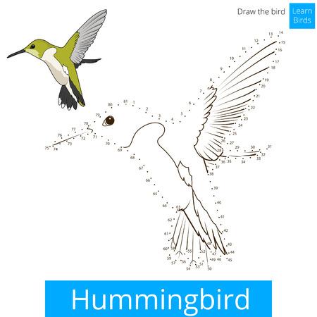 Hummingbird apprendre jeu éducatif oiseaux apprendre à dessiner illustration vectorielle Vecteurs