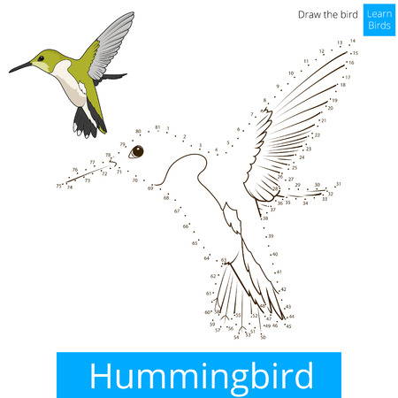 Hummingbird learn birds educational game learn to draw vector illustration Illustration