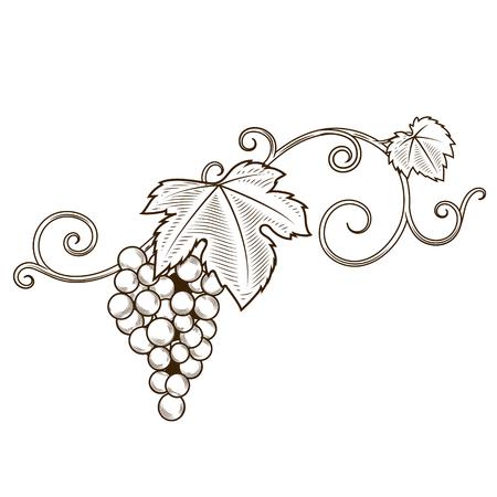 Grape branches ornament illustration