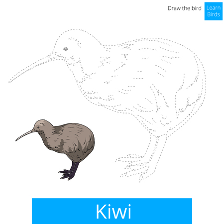 Kiwi learn birds educational game learn to draw illustration Illustration