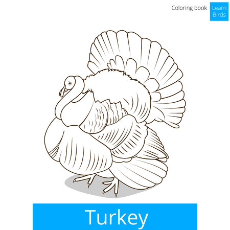 Turkey Learn Birds Educational Game Coloring Book Illustration