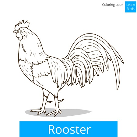Rooster learn birds educational game coloring book vector illustration