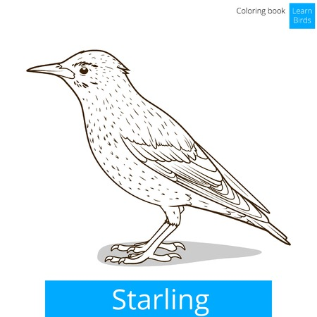 starling: Starling learn birds educational game coloring book vector illustration Illustration