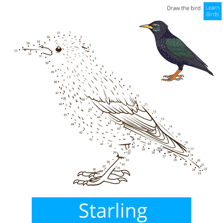 starling: Starling learn birds educational game learn to draw vector illustration