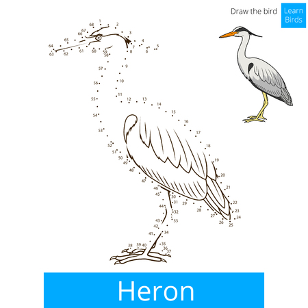 heron: Heron learn birds educational game learn to draw vector illustration