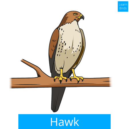 dyeing: Hawk bird learn birds educational game vector illustration