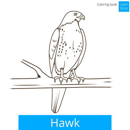 Hawk bird learn birds educational game coloring book vector illustration