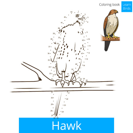 Hawk Bird Learn Birds Educational Game Coloring Book Vector Illustration