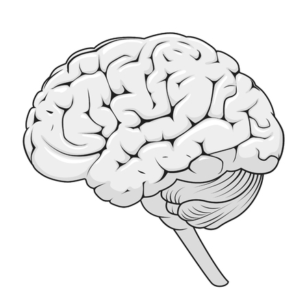 Structure of human brain schematic vector illustration. Medical science educational illustration
