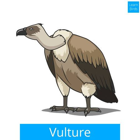 vulture: Vulture bird learn birds educational game vector illustration