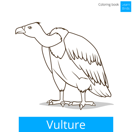 vulture: Vulture bird learn birds educational game coloring book vector illustration
