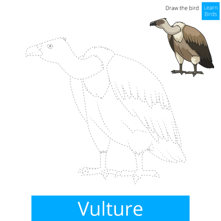 vulture: Vulture learn birds educational game learn to draw vector illustration