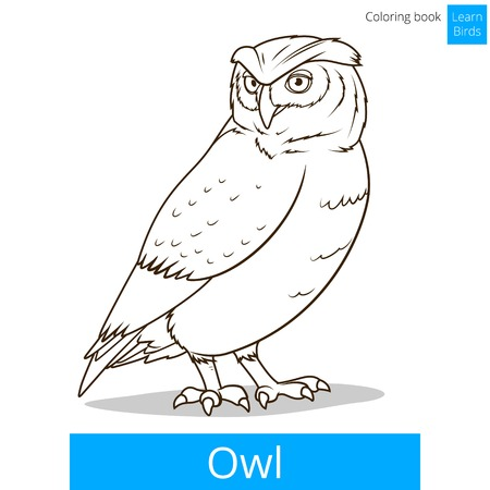 owl illustration: Owl bird learn birds educational game coloring book vector illustration