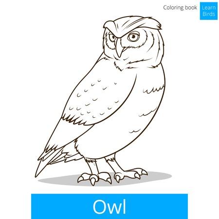 mosca caricatura: P�jaro del buho aprender ilustraci�n educativa p�jaros vector del libro para colorear juego Vectores