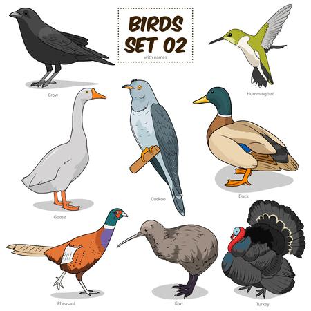 Bird set cartoon colorful vector illustration. Educational material 向量圖像