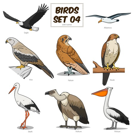 albatross: Bird set cartoon colorful vector illustration. Educational material Illustration