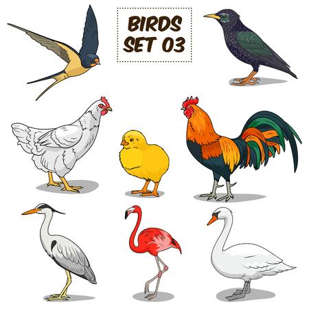 Bird set cartoon colorful vector illustration. Educational material Vettoriali