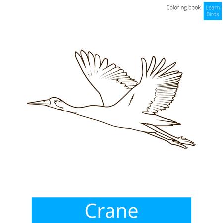 crane bird: Crane bird learn birds educational game coloring book vector illustration