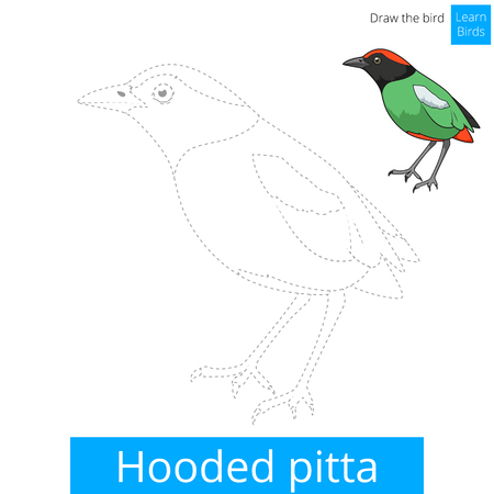 hooded: Hooded pitta learn birds educational game learn to draw vector illustration