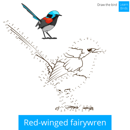 Red Winged Fairywren Learn Birds Educational Game To Draw Vector Illustration