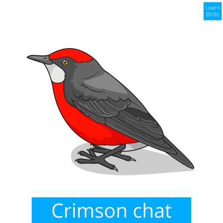 crimson: Crimson chat bird learn birds educational game vector illustration