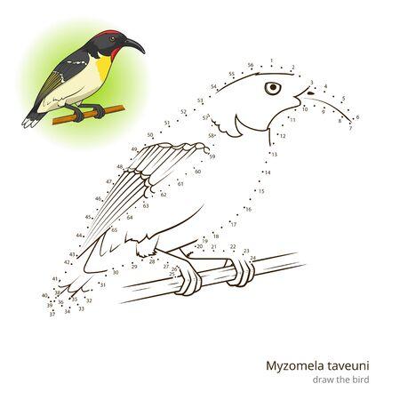 Myzomela Taveuni Learn Birds Educational Game To Draw Vector Illustration