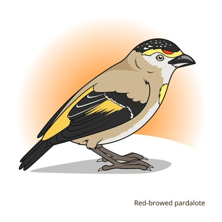 game bird: Red browed pardalote bird learn birds educational game vector illustration