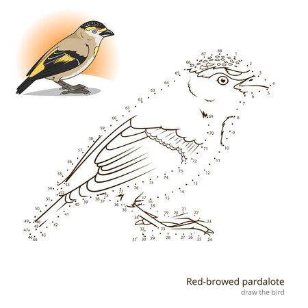 Red Browed Pardalote Learn Birds Educational Game To Draw Vector Illustration