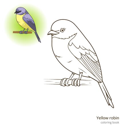 robin bird: Yellow robin bird learn birds educational game coloring book vector illustration