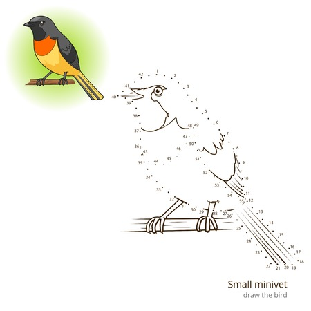Small Minivet Learn Birds Educational Game To Draw Vector Illustration