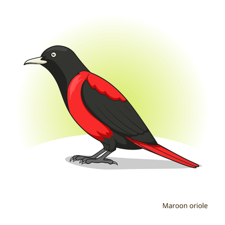 oriole: Maroon oriole bird learn birds educational game vector illustration