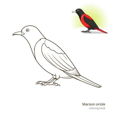 oriole: Maroon oriole bird learn birds educational game coloring book vector illustration