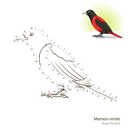 oriole: Maroon oriole learn birds educational game learn to draw vector illustration