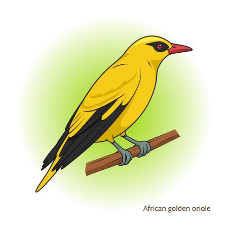 oriole: African Golden Oriole bird learn birds educational game vector illustration Illustration