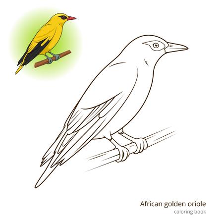 oriole: African Golden Oriole bird learn birds educational game coloring book vector illustration