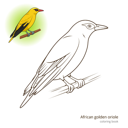 African Golden Oriole bird learn birds educational game coloring book vector illustration