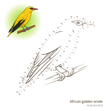 oriole: African Golden Oriole learn birds educational game learn to draw vector illustration Illustration