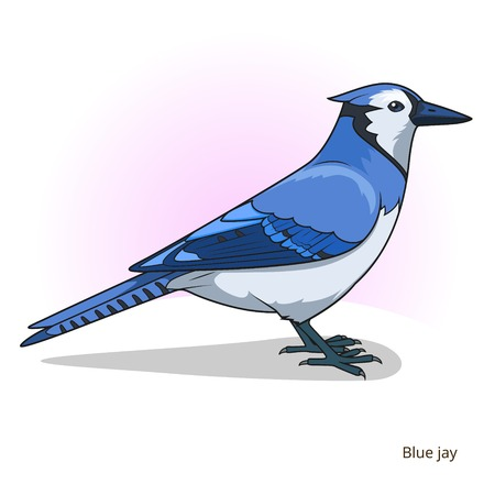 jay: Blue jay bird learn birds educational game vector illustration