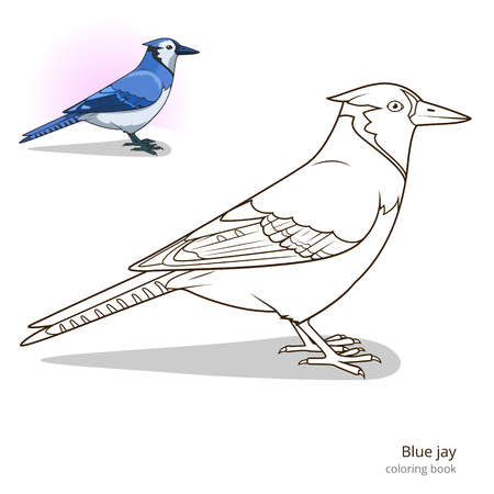 educational material: Blue jay bird learn birds educational game coloring book vector illustration