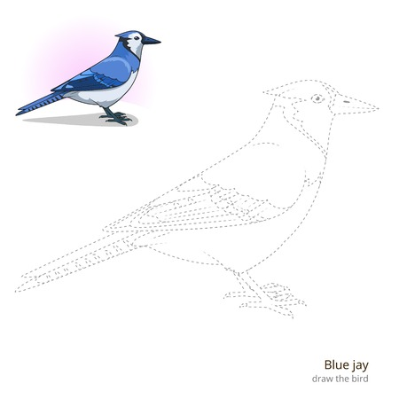 jay: Blue jay learn birds educational game learn to draw vector illustration