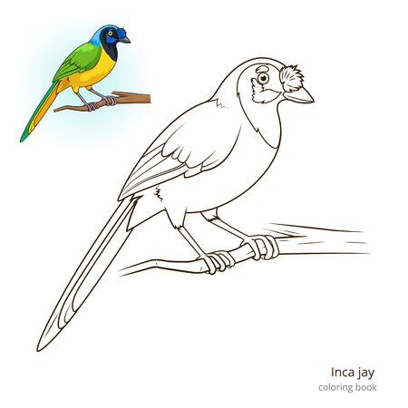 jay: Inca jay bird learn birds educational game coloring book illustration