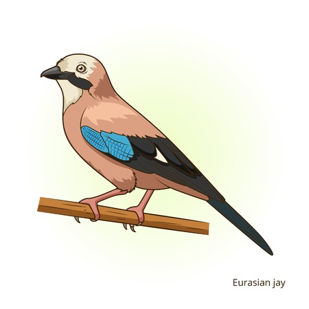 jay: Eurasian jay bird learn birds educational game illustration