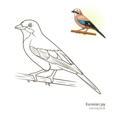Eurasian jay bird learn birds educational game coloring book illustration