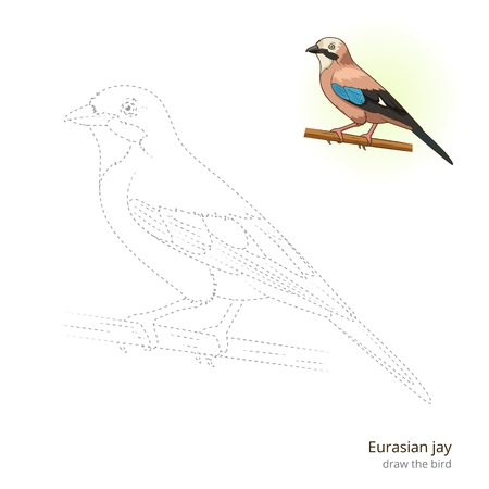 jay: Eurasian jay learn birds educational game learn to draw vector illustration