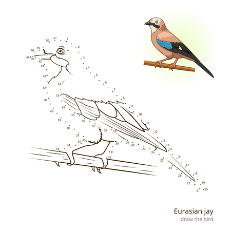 eurasian: Eurasian jay learn birds educational game learn to draw illustration Illustration