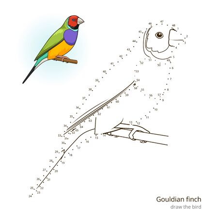 finch: Gouldian finch learn birds educational game learn to draw vector illustration Illustration